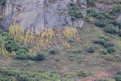 反对岩石的秋天颜色 免版税库存图片