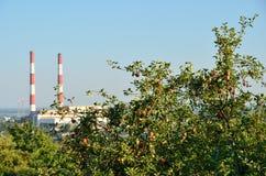 反对工厂管子的苹果树 免版税库存照片