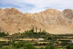 反对干燥山的绿色山谷在Leh,拉达克 免版税库存照片