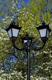 反对开花木兰树和蓝天背景的老街道路灯柱 免版税库存照片