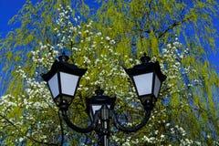 反对开花树和蓝天背景的老街道路灯柱 免版税库存图片
