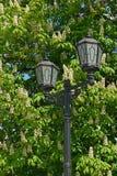 反对开花的栗子背景的街灯在春天 图库摄影