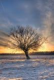 反对日出的树 免版税库存照片