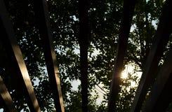 反对日落和树的抽象木板条 库存照片