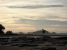反对日落和海洋背景的树剪影 库存照片