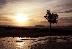 反对日落和海洋背景的树剪影 免版税库存图片