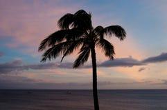 反对日落天空的一棵棕榈 免版税库存照片