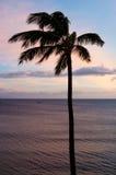 反对日落天空的一棵棕榈 库存照片