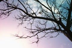 反对日落天空的不生叶的树枝 棒图象夫人减速火箭的抽烟的样式 免版税库存照片