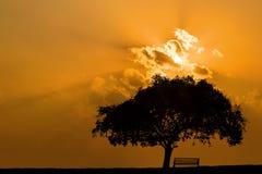 反对日落天空的偏僻的大树剪影 免版税库存图片