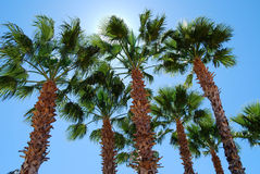 反对明亮的午间太阳的棕榈树 免版税库存图片