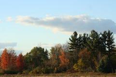 反对明亮的多云天空的秋天树 免版税库存照片