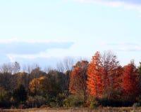 反对明亮的多云天空的秋天树 免版税库存图片
