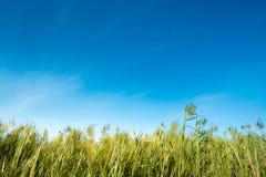 反对明亮的天空的草甸 库存照片