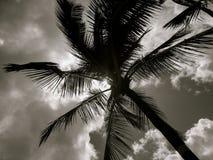 反对明亮的太阳的棕榈树 图库摄影