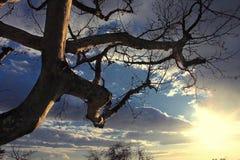 反对明亮的日落天空的树 库存照片