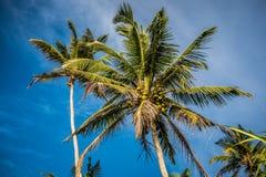 反对明亮的蓝天的棕榈树 免版税库存图片