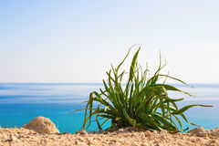 反对明亮的蓝色海的绿色植物作为天然泉或夏天背景 库存图片