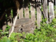 反对木篱芭的被放弃的木短管轴上面 免版税库存照片