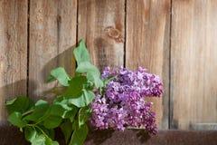 反对木背景的淡紫色分支 免版税图库摄影
