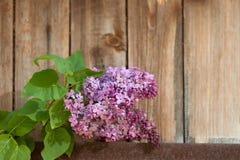 反对木背景的淡紫色分支 库存图片