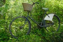 反对树的葡萄酒古典自行车 库存照片