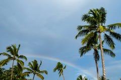 反对棕榈树构筑的朦胧的蓝天背景的彩虹 库存照片