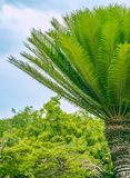 反对森林和天空的帕尔马 免版税图库摄影