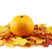 反对槭树叶子构成的橙色南瓜 库存照片