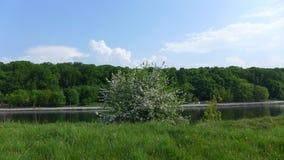 反对河的树 库存照片