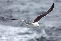 反对海的孤独的海鸥讨厌的天气的 免版税库存照片
