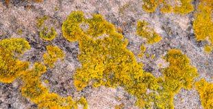 反对海滩岩石的黄色地衣纹理 图库摄影