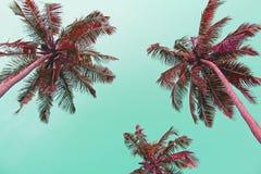 反对淡色日落的桃红色棕榈树剪影在一轻的gre 库存图片