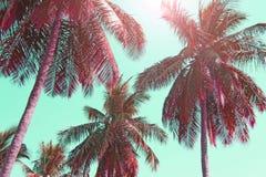 反对淡色日落的桃红色棕榈树剪影在一轻的gre 图库摄影