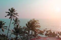 反对淡色日落的棕榈树剪影在浅绿色的sk 免版税库存图片