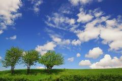 反对深蓝天的三棵偏僻的绿色树 库存图片