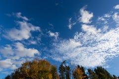 反对深蓝天的五颜六色的秋天树 库存图片