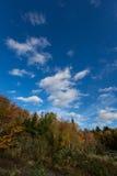 反对深蓝天的五颜六色的秋天树 图库摄影