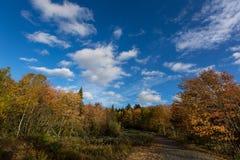 反对深蓝天的五颜六色的秋天树 免版税图库摄影
