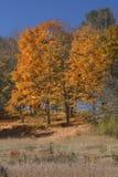 反对深蓝天,曼斯菲尔德凹陷, Connecti的橙色叶子 免版税库存图片