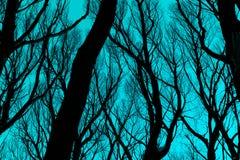 反对深蓝蓝天的光秃的分支剪影 图库摄影