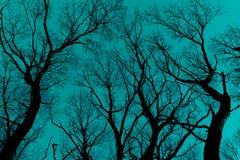 反对深蓝蓝天的光秃的分支剪影 免版税库存图片