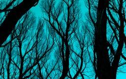 反对深蓝蓝天的光秃的分支剪影 库存照片