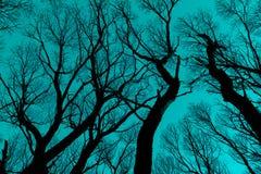 反对深蓝蓝天的光秃的分支剪影 免版税库存照片