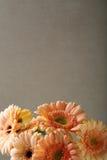 反对混凝土的大丁草花束 库存图片