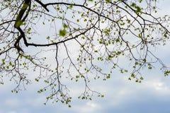 反对清楚的天空的树枝剪影 自然有机背景 抽象符号概念 对现代墙纸或 库存照片