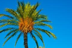 反对清楚的蓝天的枣椰子由金黄太阳射线,低角度射击,背景,墙纸点燃了 免版税库存照片