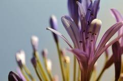 反对清楚的蓝天的美丽的浪漫紫色野花 免版税库存图片