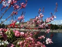 反对湖和城市,斯德哥尔摩背景的花 免版税库存图片