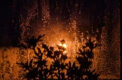 反对湿玻璃的植物剪影 图库摄影